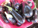 Big, beautiful eggplants this year, although I probably planted too many