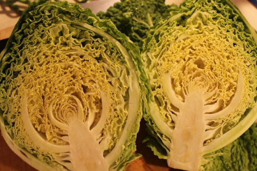 savoy cabbage in all of its curly splendor