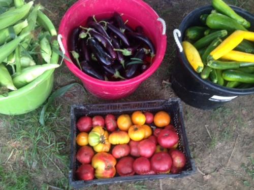 the summer harvest is in full swing