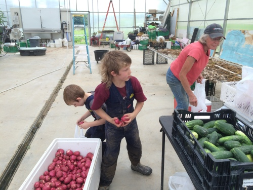 awesome farm helpers weighing and sorting last week's potatoes