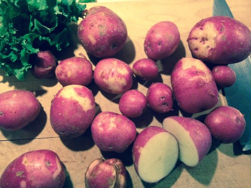 Thin-skinned new potatoes are a July delicacy