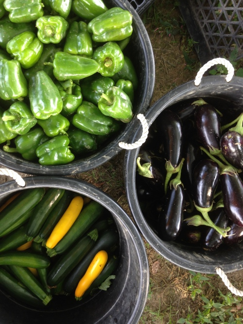 Yup, peppers, zucchini and eggplant are all technically fruit.