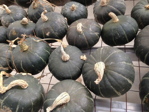 buttercup squash — pictured here — and orange kabocha squash are excellent in pies